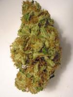 Marijuana for sale Weed Bank Canada