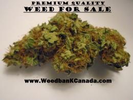 Weed Bank Canada